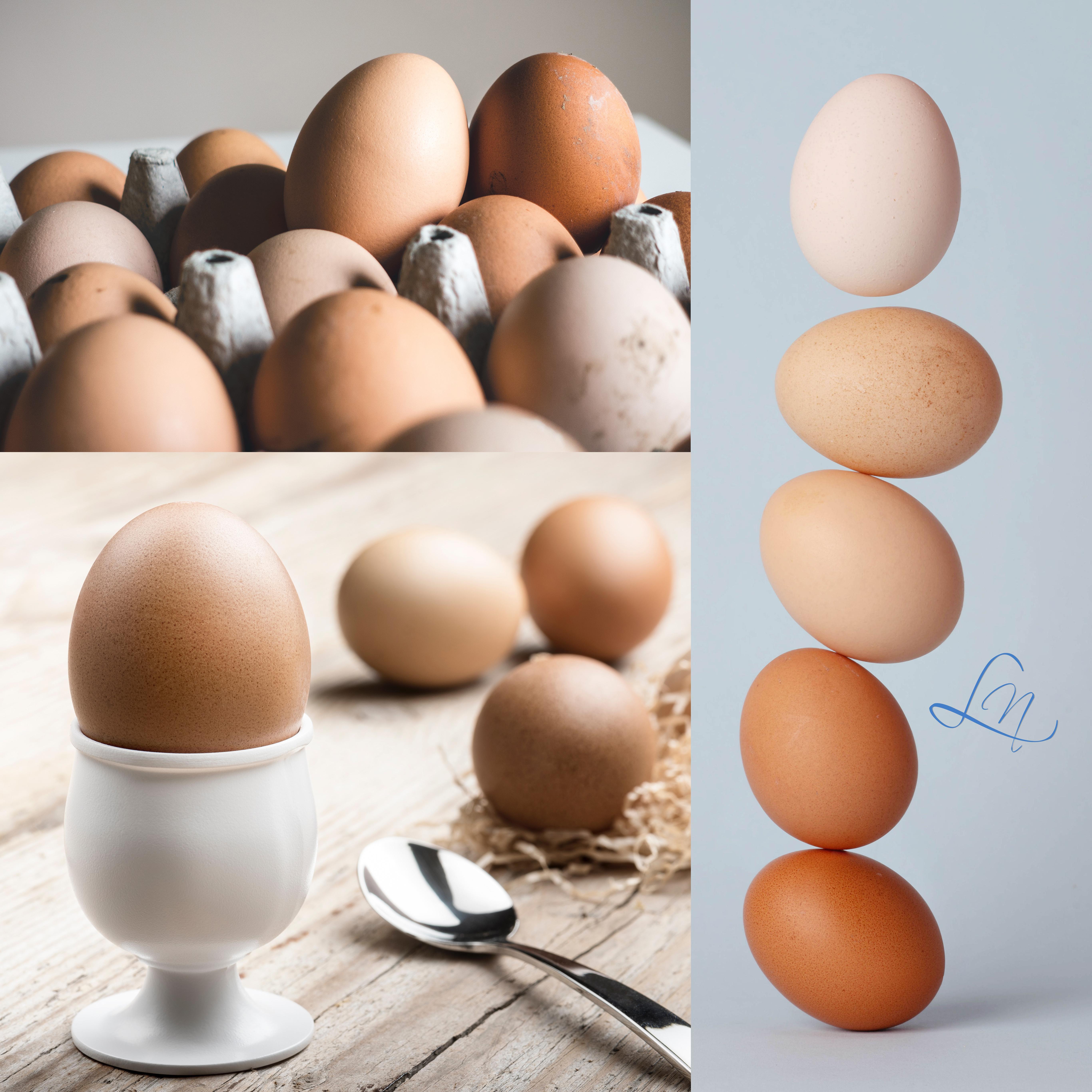 il codice dell'uovo sicurezza alimentare belluno consulenze noacco